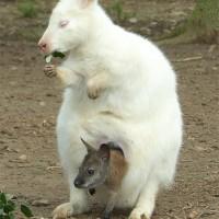 EPN-Parc-Australien-PH-4-16