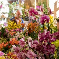 Fontfroide orchidées 2 19