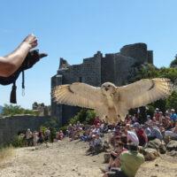 Peyrepertuse Fauconnier 1