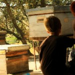 Miellerie clauses narbonne abeilles apiculture