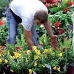 Les marches de narbonne fleuriste