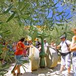 Oulibo narbonne visite olivier