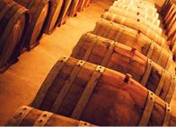 découvrez les vignobles et la gastronomie à Narbonne